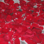 Wordless Wednesday: Rose Petal Bath