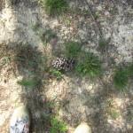 Pinecone At My Feet #AugustBreak