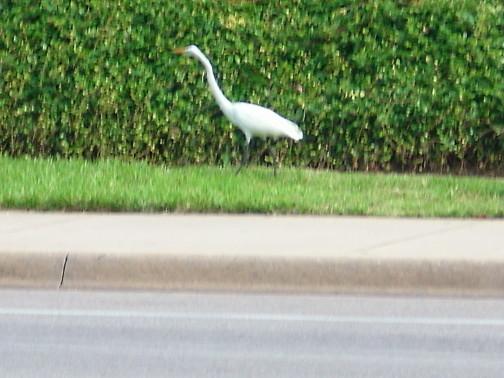 white_ibis_campus