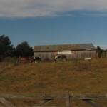 #30DaysofGratitude Farmlands