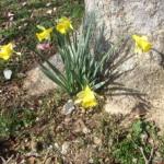 #WordlessWednesday Spring Has Sprung